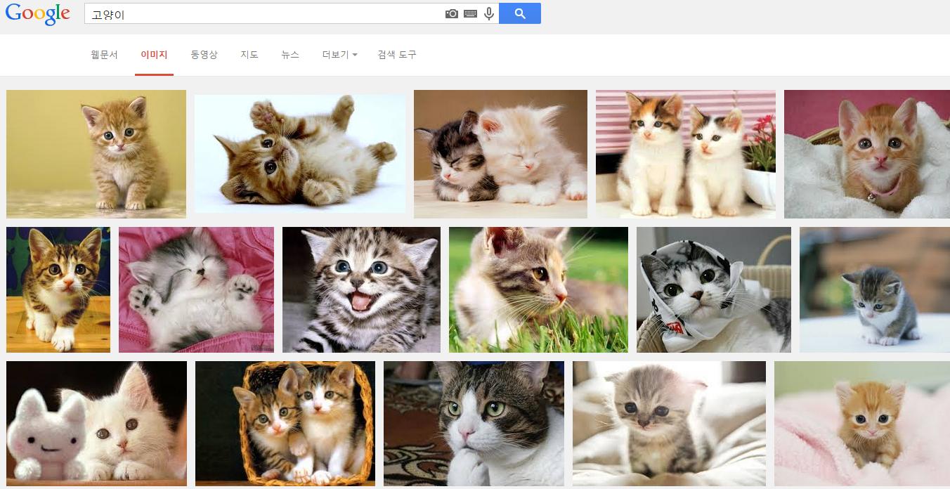 제 구글 이미지 검색 페이지에서 '고양이'를 입력했을 때 검색결과. 일일이 태그를 달지 않아도 고양이로 인식해 검색결과를 보여준다
