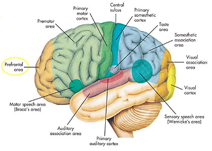 몰입을 경험할 때 전전두엽(prefrontal area)이 활성화된다